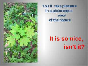 You'll take pleasure in a picturesque view of the nature It is so nice, isn'