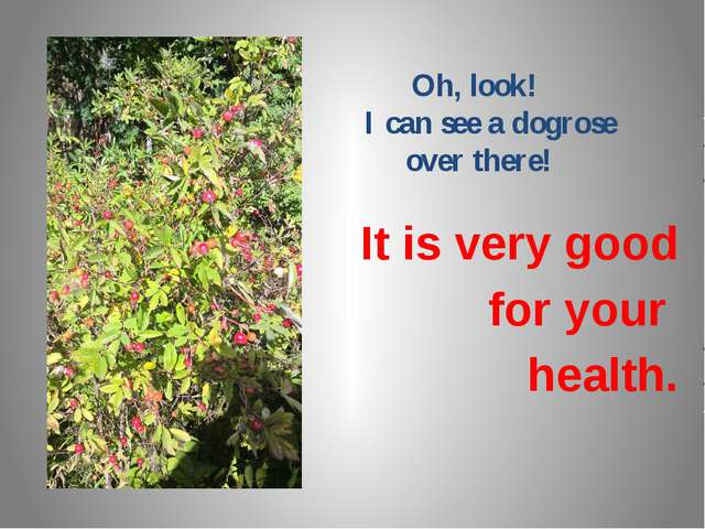Oh, look! I can see a dogrose over there! It is very good for your health.