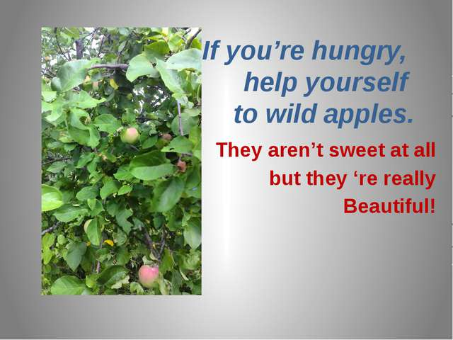 If you're hungry, help yourself to wild apples. They aren't sweet at all but...