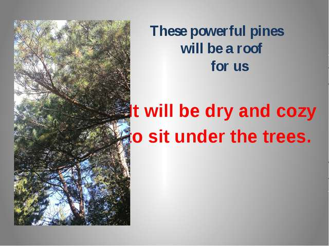 These powerful pines will be a roof for us It will be dry and cozy to sit un...