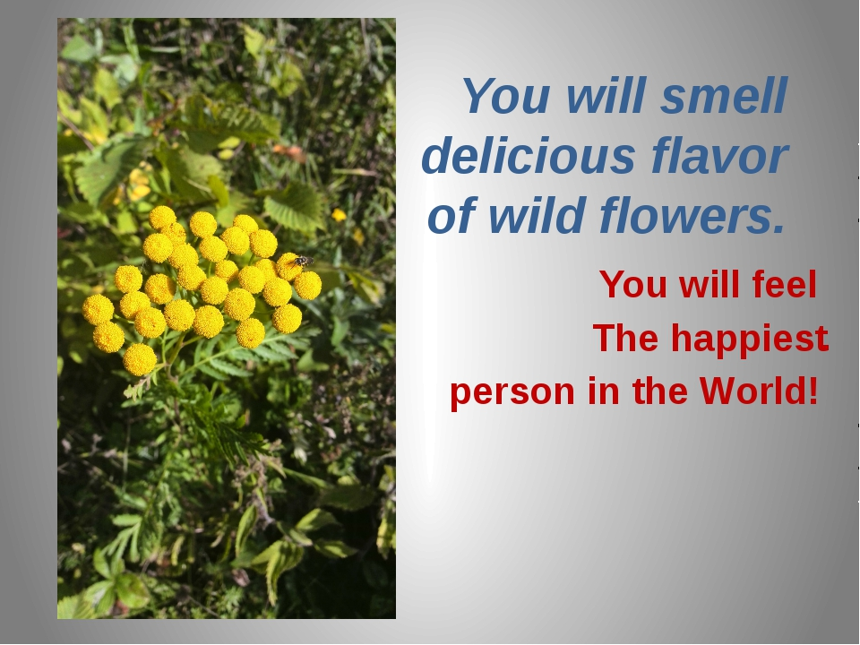 You will smell delicious flavor of wild flowers. You will feel The happiest ....
