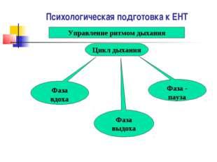 Психологическая подготовка к ЕНТ Управление ритмом дыхания Цикл дыхания Фаза