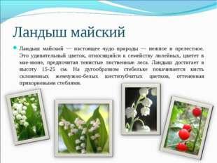 Ландыш майский Ландыш майский — настоящее чудо природы — нежное и прелестное.