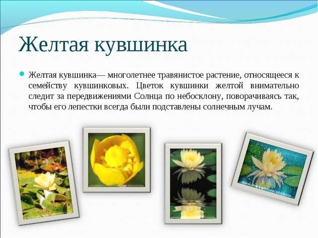 Желтая кувшинка Желтая кувшинка— многолетнее травянистое растение, относящеес...