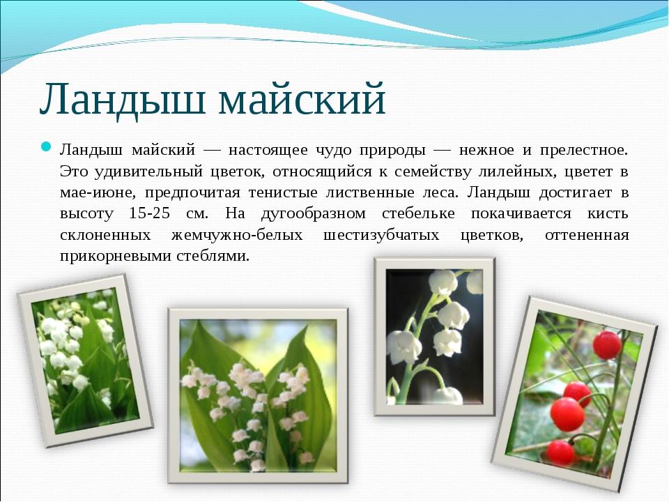 Ландыш майский Ландыш майский — настоящее чудо природы — нежное и прелестное....