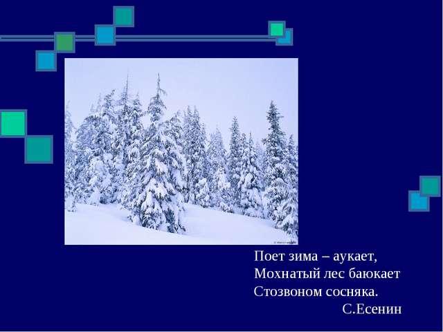 Поет зима – аукает, Мохнатый лес баюкает Стозвоном сосняка. С.Есенин
