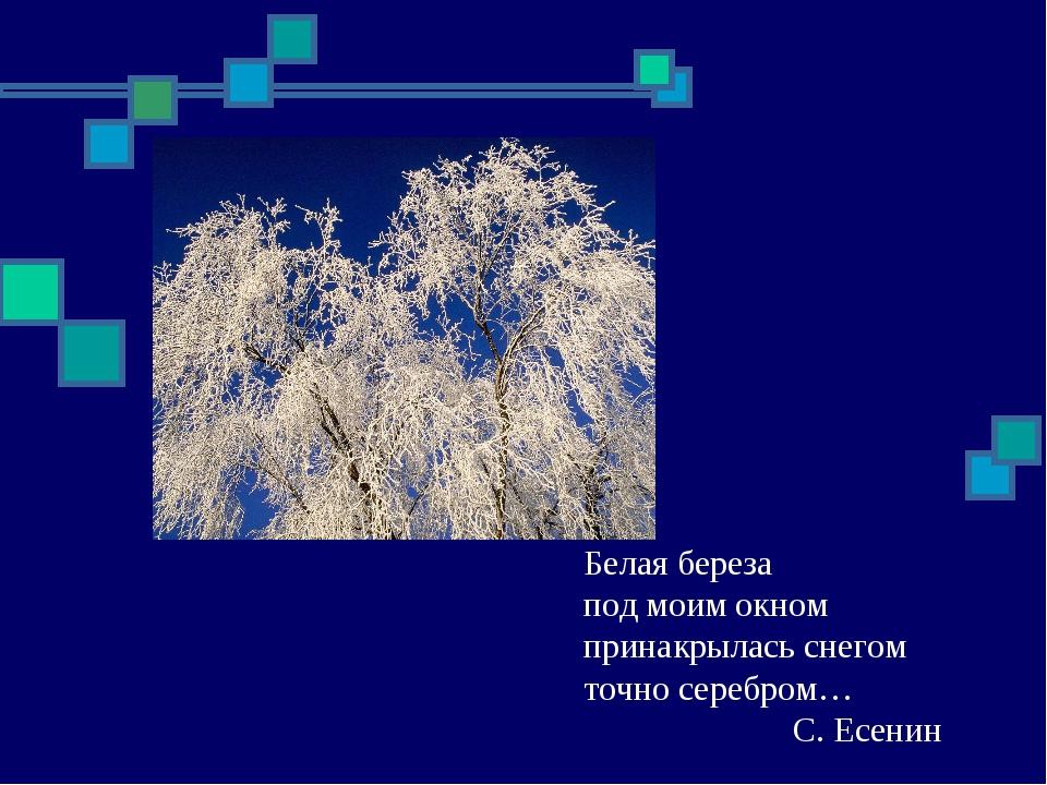 Белая береза под моим окном принакрылась снегом точно серебром…С. Есенин