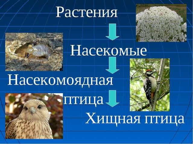 Растения Насекомые Насекомоядная птица Хищная птица