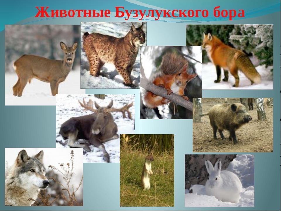 Животные Бузулукского бора