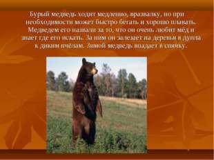 Бурый медведь ходит медленно, вразвалку, но при необходимости может быстро бе