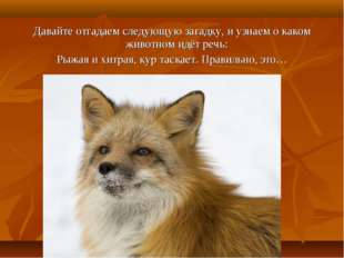 Давайте отгадаем следующую загадку, и узнаем о каком животном идёт речь: Рыжа