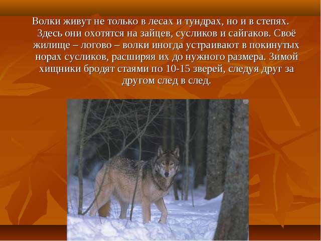Волки живут не только в лесах и тундрах, но и в степях. Здесь они охотятся на...