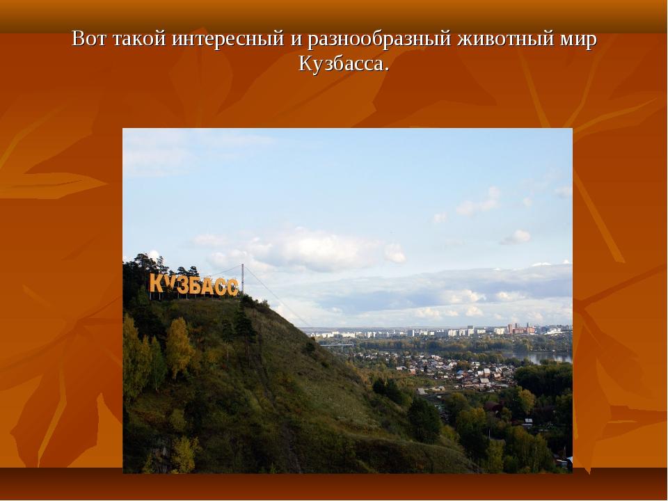 Вот такой интересный и разнообразный животный мир Кузбасса.
