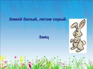 Зимой белый, летом серый. Заяц