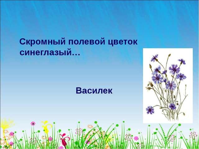 Скромный полевой цветок синеглазый… Василек