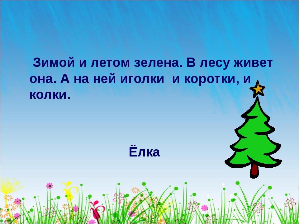 Зимой и летом зелена. В лесу живет она. А на ней иголки и коротки, и колки....