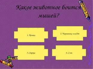 Какое животное боится мышей? 1. Кошка 3. Страус 4. Слон 2. Черепашки-ниндзя