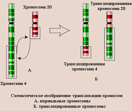 http://www.pedklin.ru/VPR/images/mut2.jpg