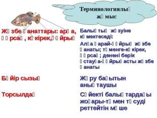 Терминологиялық жұмыс Жүзбе қанаттары: арқа, құрсақ, көкірек,құйрық Балықтың