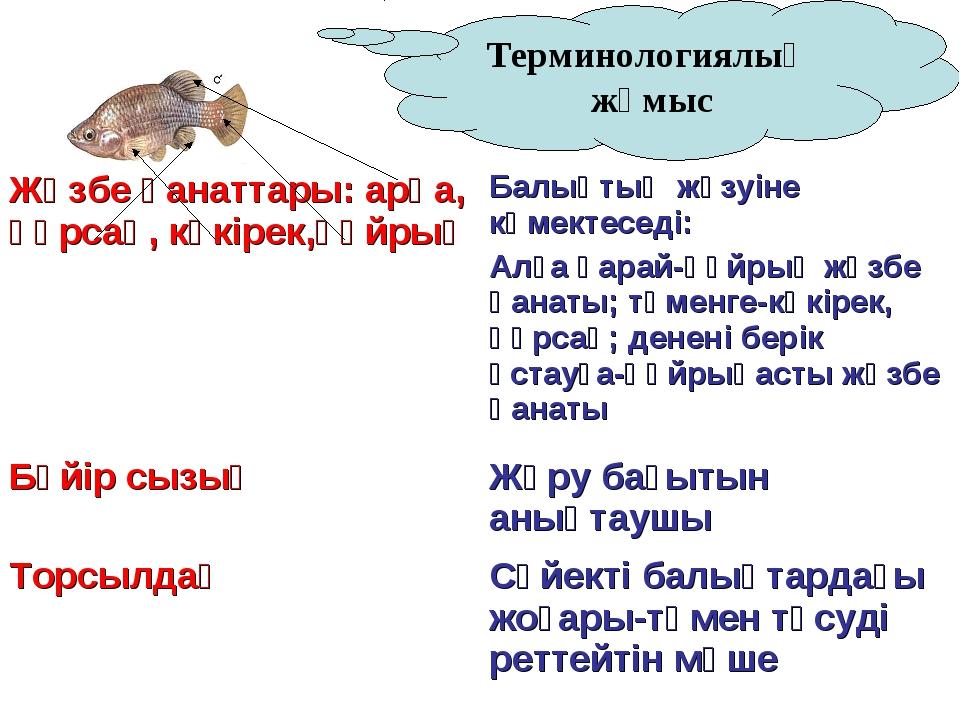 Терминологиялық жұмыс Жүзбе қанаттары: арқа, құрсақ, көкірек,құйрық Балықтың...