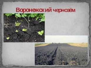 Воронежский чернозём