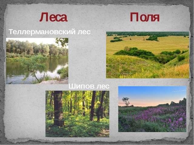 Леса Поля Шипов лес Теллермановский лес