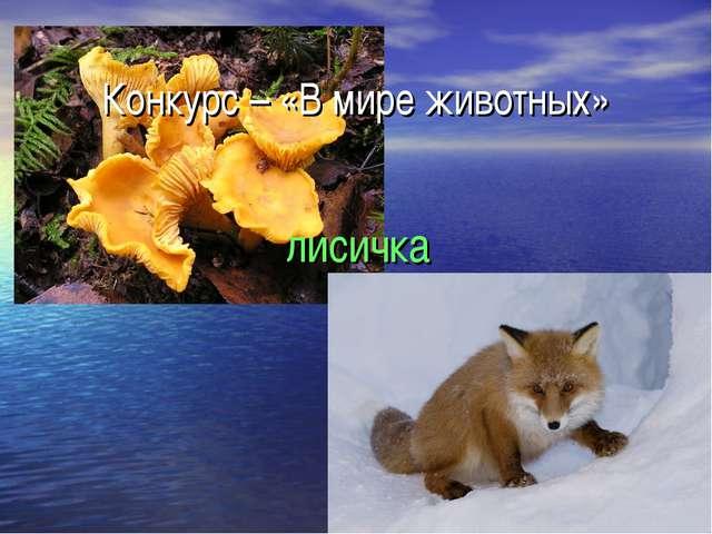 Конкурс – «В мире животных» лисичка