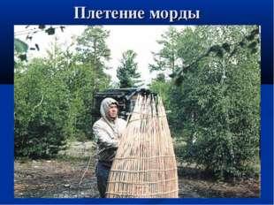Плетение морды