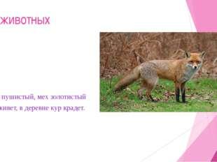 Мир животных 2.Хвост пушистый, мех золотистый В лесу живет, в деревне кур кра
