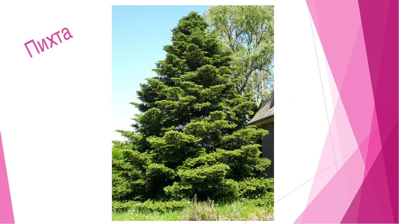 Мир растений 9. Лиственное дерево-медонос. Цветет позднее всех. Липа Лиса Зим...