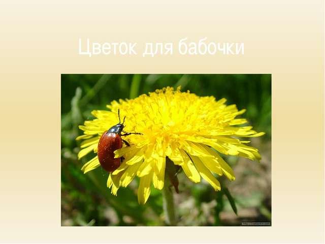 Цветок для бабочки