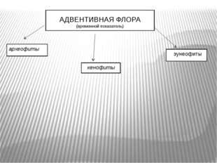 АДВЕНТИВНАЯ ФЛОРА (временной показатель) археофиты кенофиты эунеофиты