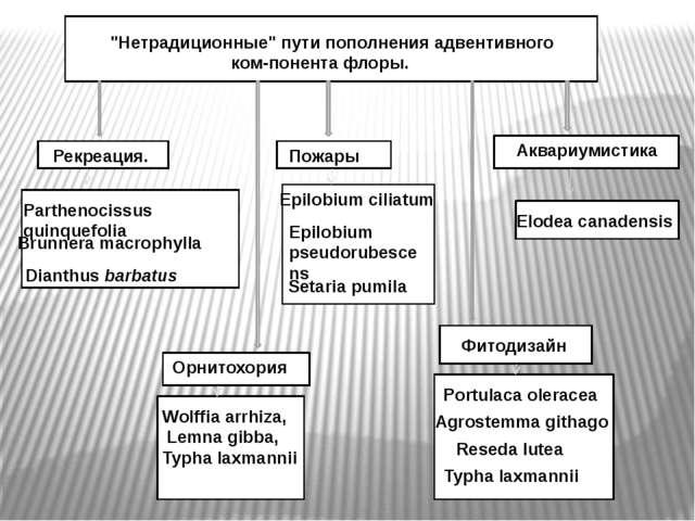 """""""Нетрадиционные"""" пути пополнения адвентивного компонента флоры. Рекреация...."""