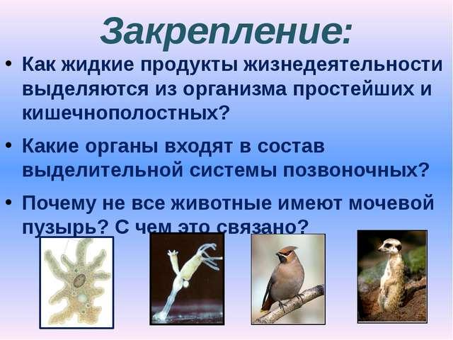 Закрепление: Как жидкие продукты жизнедеятельности выделяются из организма пр...