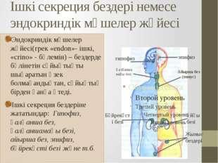 эпифиз гипофиз Қалқаншамаңы безі Ішкі секреция бездері немесе эндокриндік мүш