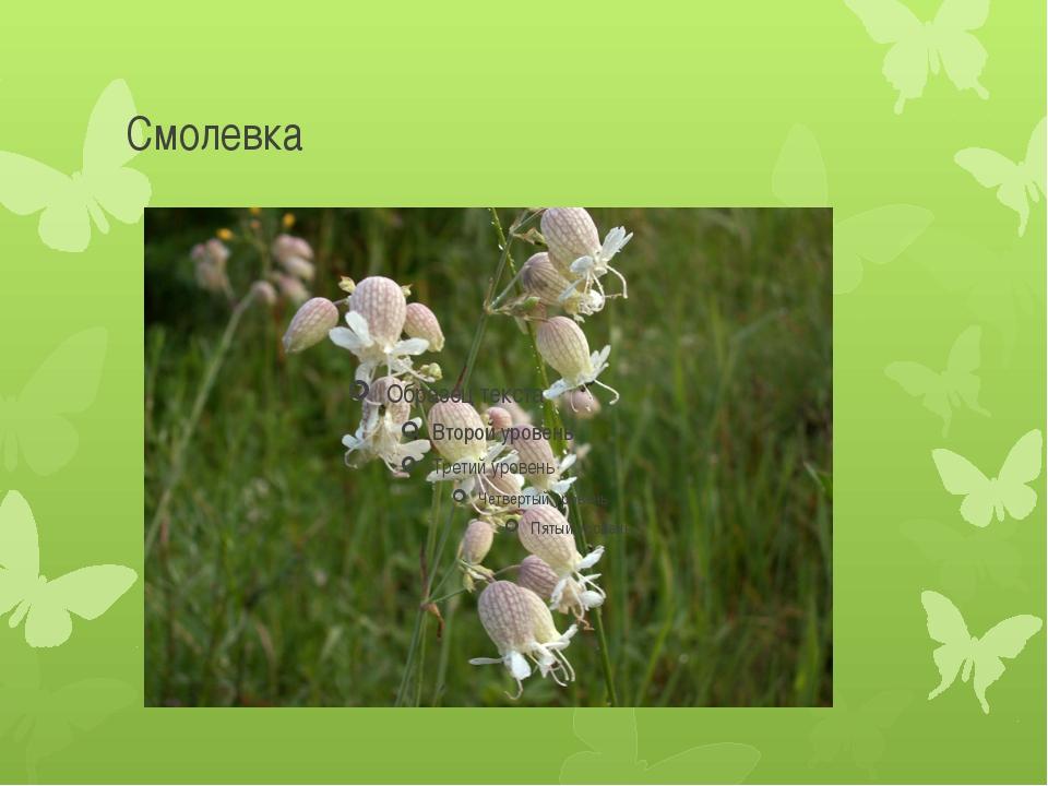 Смолевка