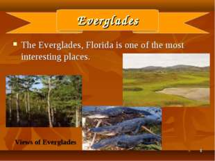 * Everglades The Everglades, Florida is one of the most interesting places. V