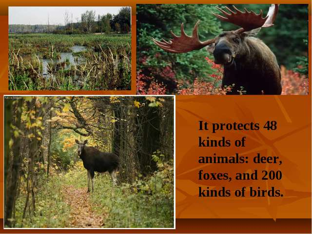 It protects 48 kinds of animals: deer, foxes, and 200 kinds of birds.