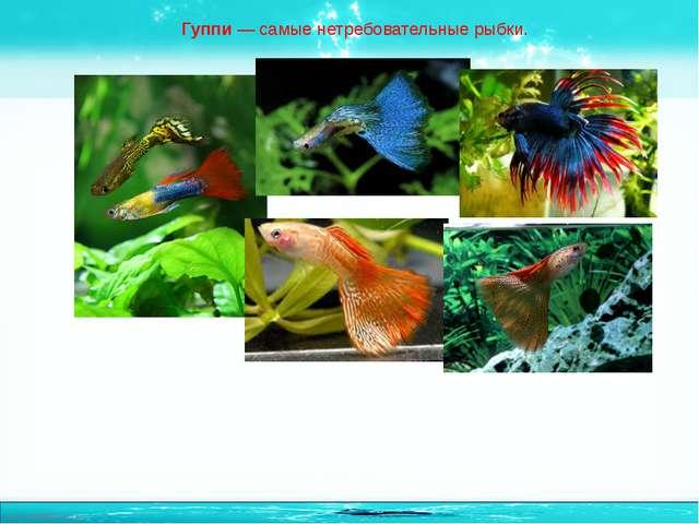 Гуппи— самые нетребовательные рыбки. http://linda6035.ucoz.ru/