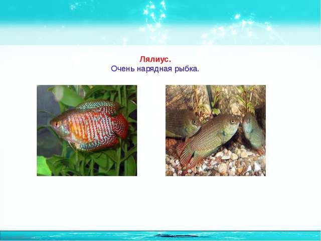 Лялиус. Очень нарядная рыбка. http://linda6035.ucoz.ru/