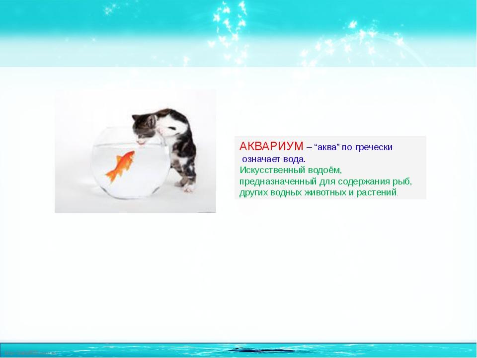 """АКВАРИУМ – """"аква"""" погречески означает вода. Искусственный водоём, предназнач..."""