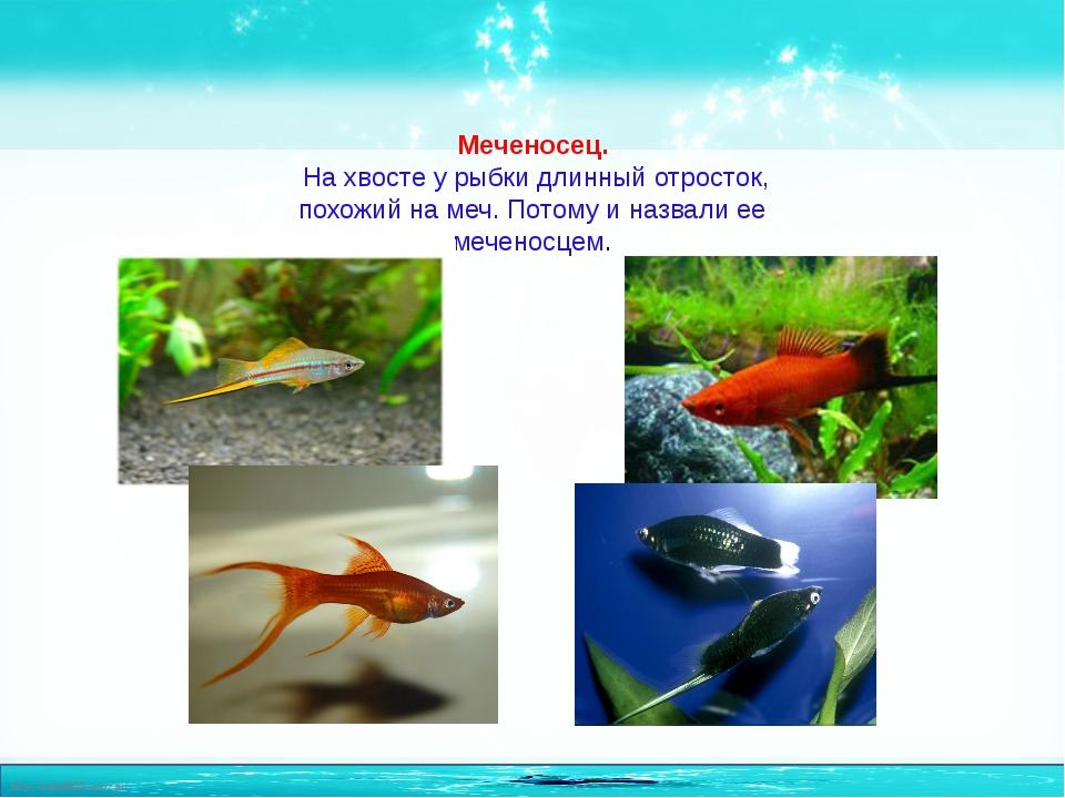 проект о рыбках в картинках могут быть, как