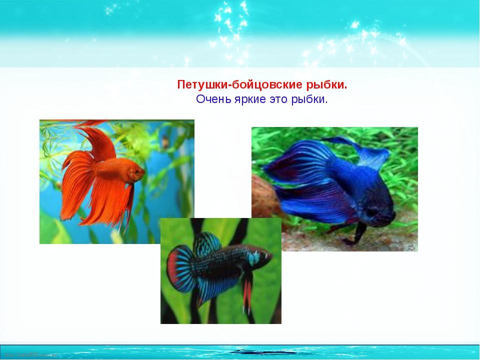 Петушки-бойцовские рыбки. Очень яркие это рыбки. http://linda6035.ucoz.ru/