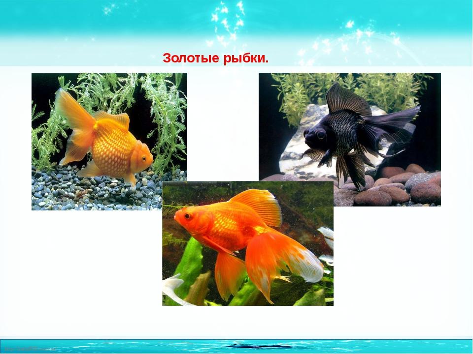 Золотые рыбки. http://linda6035.ucoz.ru/
