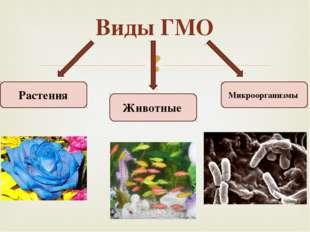 Виды ГМО Животные Растения Микроорганизмы 