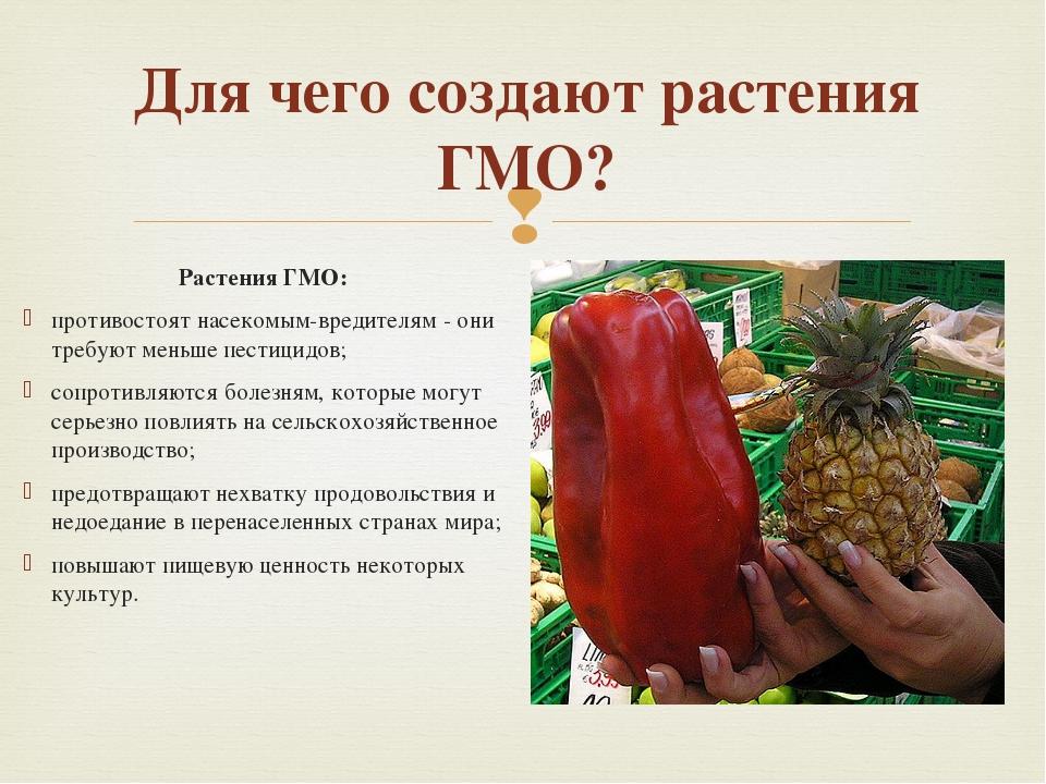 Для чего создают растения ГМО? Растения ГМО: противостоят насекомым-вредителя...