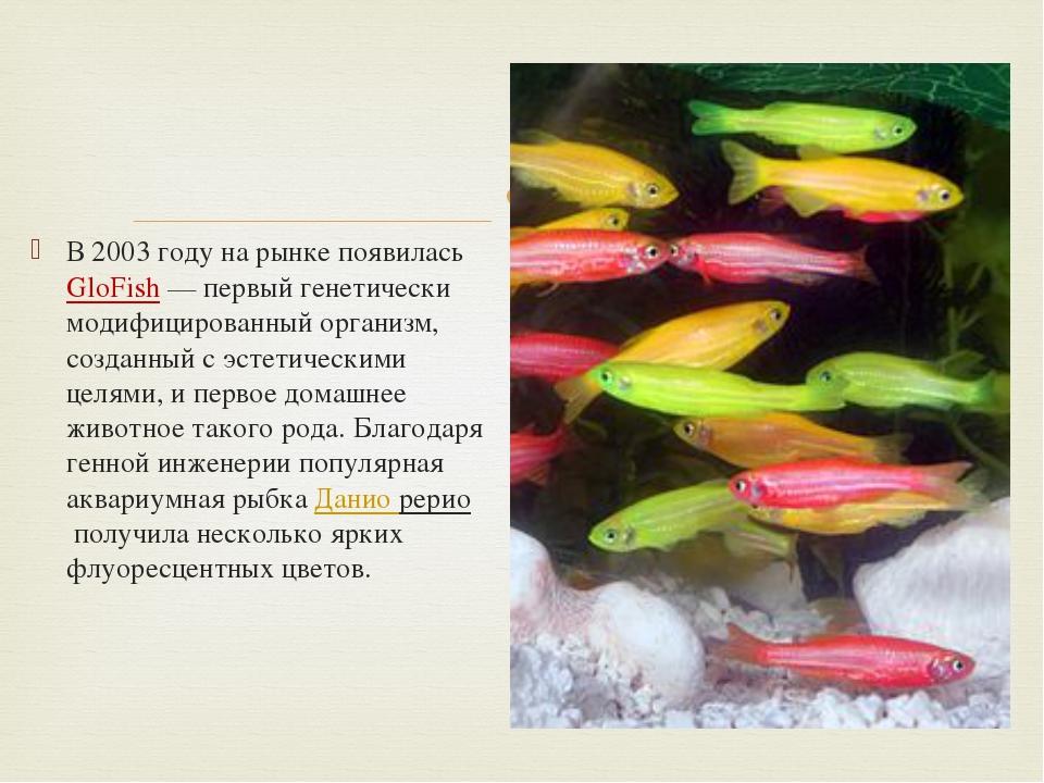 В 2003 году на рынке появиласьGloFish— первый генетически модифицированный...