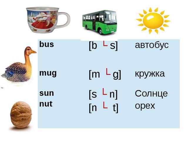 bus [bʌs] автобус mug [mʌg] кружка sun nut [sʌn] [nʌt] Солнце орех