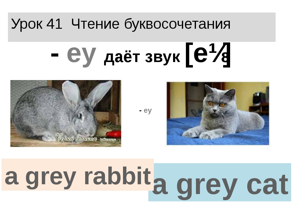 Урок 41 Чтение буквосочетания - еy даёт звук [eɪ] a grey cat a grey rabbit - еy