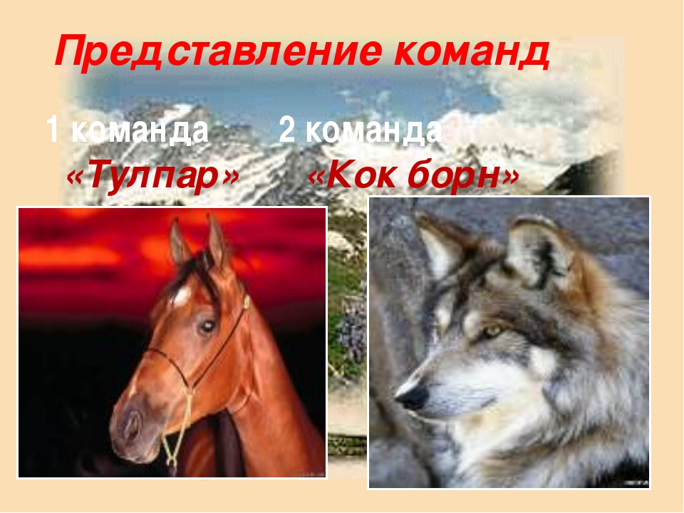 Представление команд 1 команда 2 команда «Тулпар» «Кок борн»